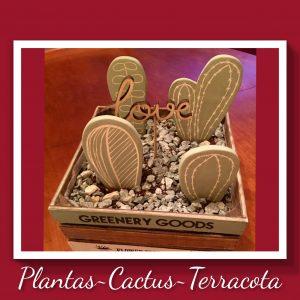 Plantas Cactus Terracota